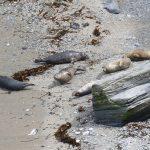 Seals basking in the sun